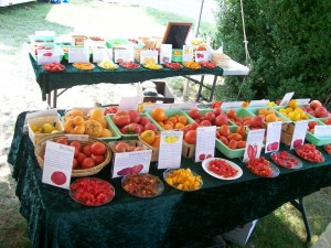 Heirloom tomato tasting fredericksburg southern exposure seed exchange organic