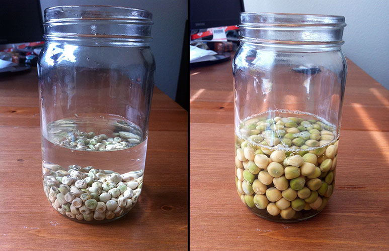 pre-sprouting seeds with an overnight soak