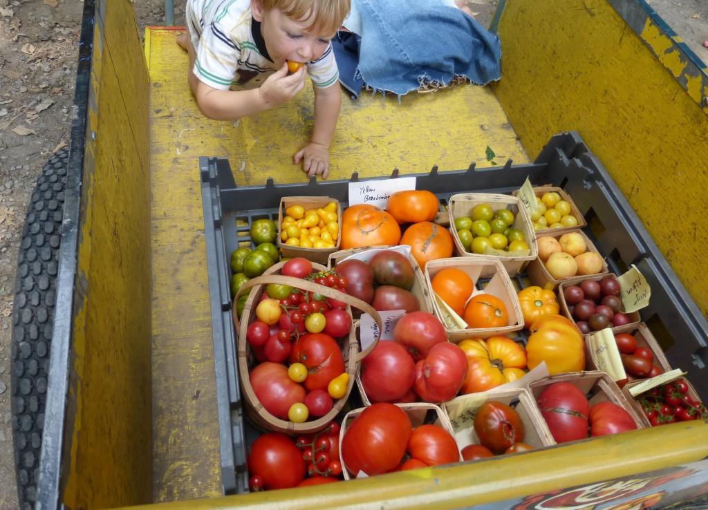 Degustación épica de tomates y tomates: cómo seleccionar y cultivar las mejores variedades de todos los tiempos