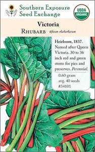 Cultivo de ruibarbo a partir de semillas | Intercambio de semillas de exposición al sur