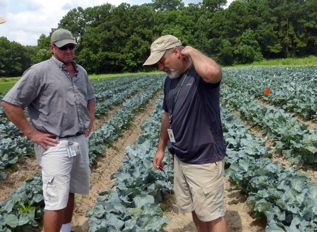 Estaciones de investigación en agricultura sostenible   Intercambio de semillas de exposición al sur