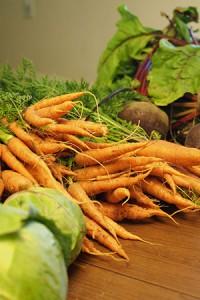 danvers 126 carrots