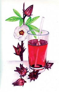 roselle-tea-herb
