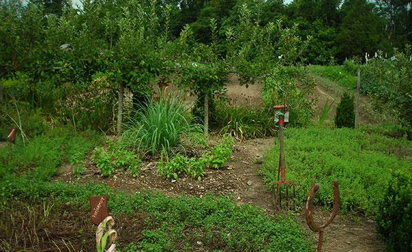 jardín de hierbas de robles gemelos