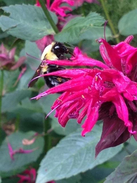Bálsamo rosa con abeja