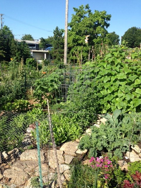 Community vegetable garden in Minneapolis