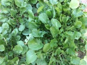 verduras cremosas