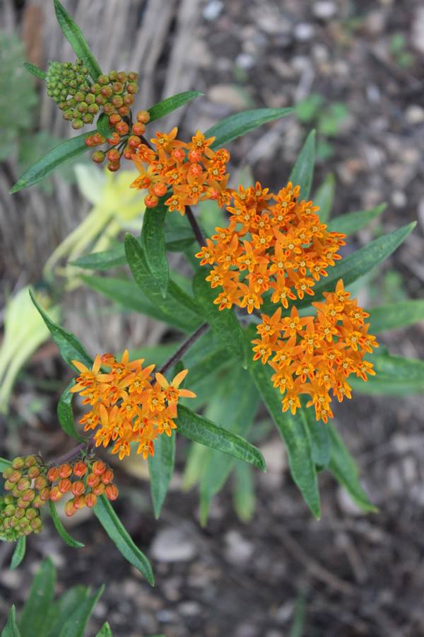 Image Result For How To Start A Wildflower Garden