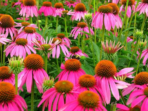 Planificación de un jardín polinizador | Intercambio de semillas de exposición al sur