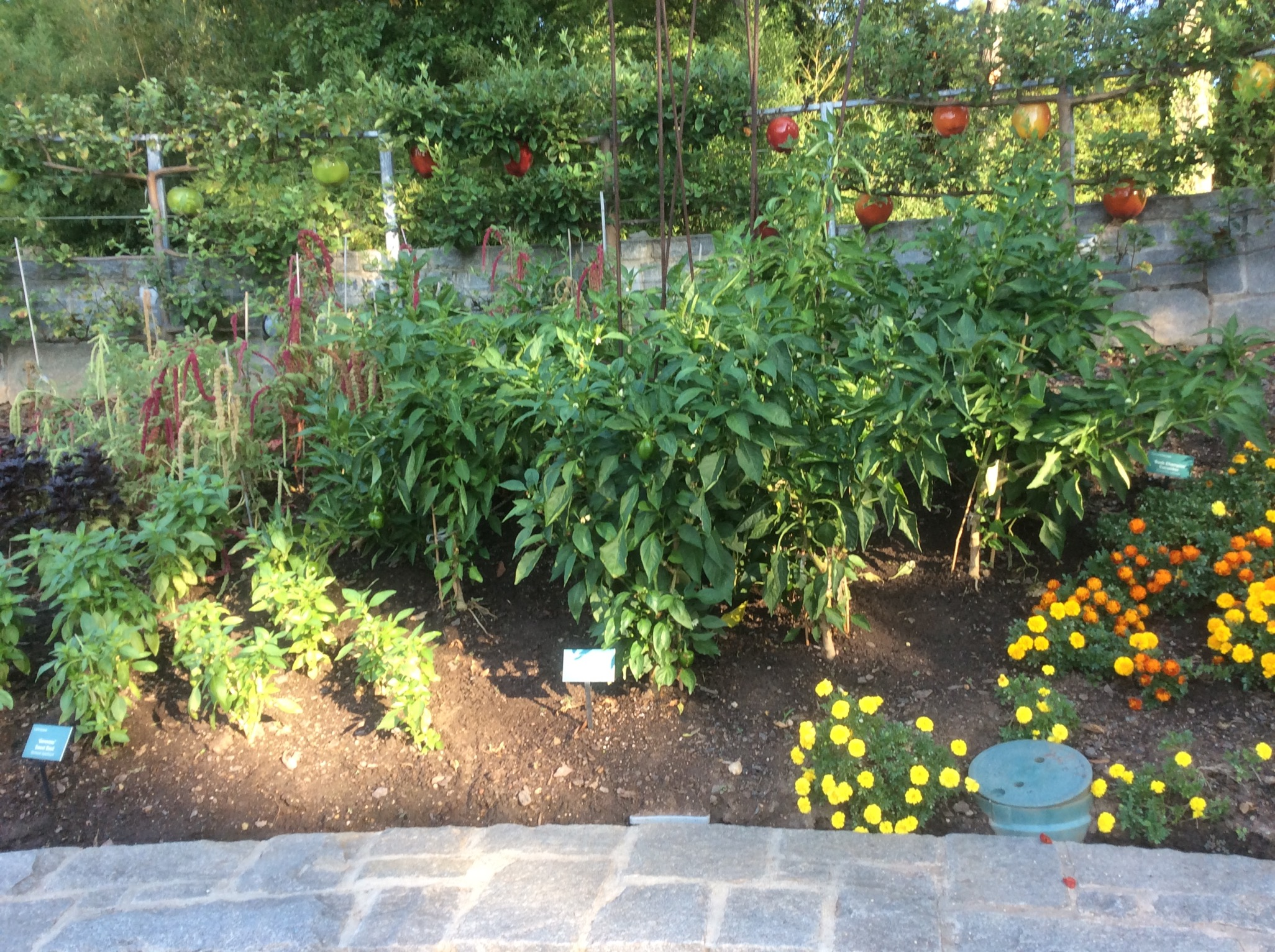 7 Benefits Of Companion Planting Southern Exposure Seed Exchange