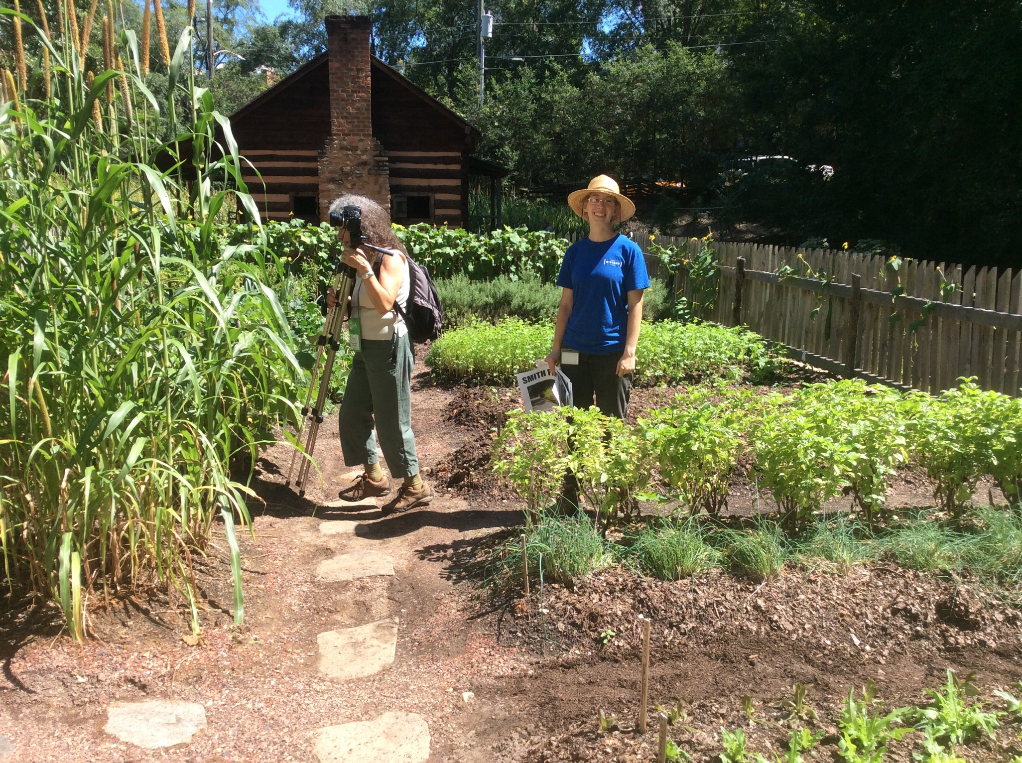 7 beneficios de la plantación complementaria