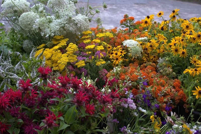 Image Result For How To Start A Pollinator Garden