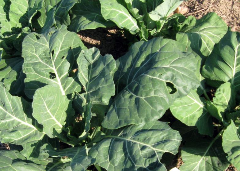 10 variedades que puedes plantar en julio para una cosecha otoñal increíble