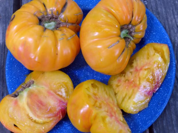 Ahorro de semillas para principiantes   Intercambio de semillas de exposición al sur