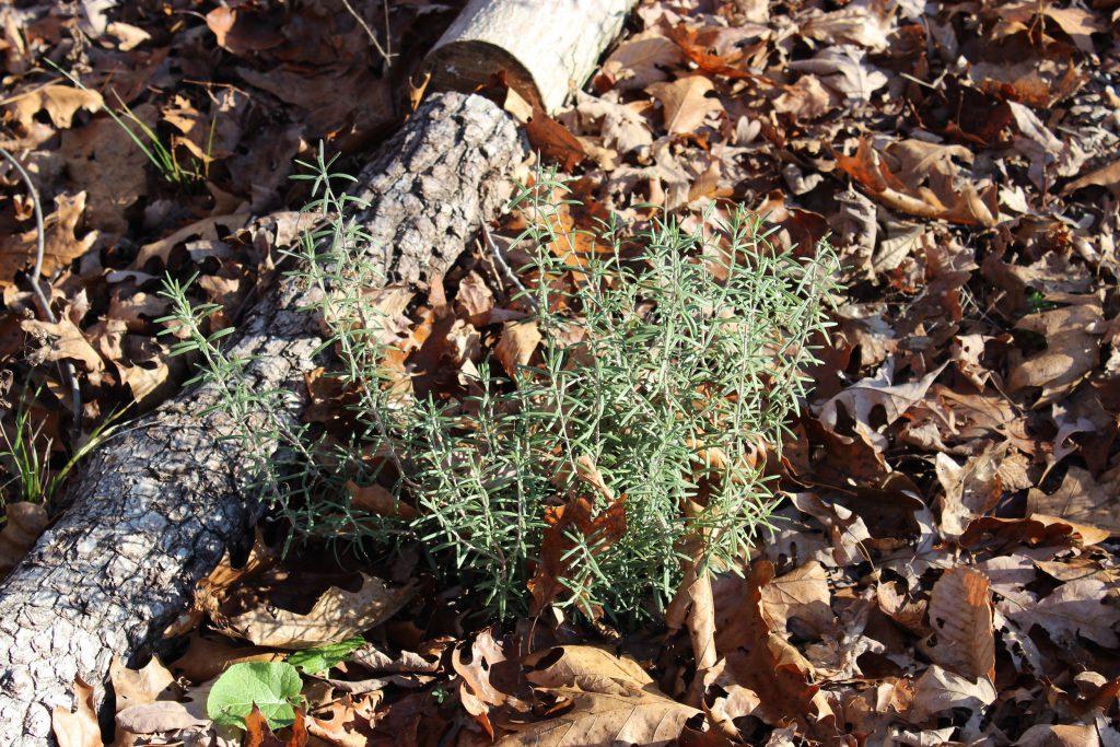 Lista de verificación de jardinería de otoño | Intercambio de semillas de exposición al sur