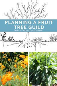 Planificación de un gremio de árboles frutales
