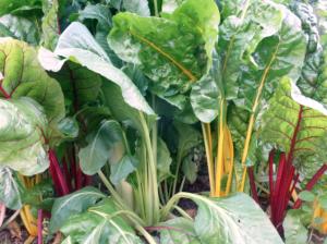 12 variedades perfectas para jardinería en macetas
