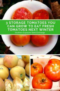 3 tomates de almacenamiento que puedes cultivar para comer tomates frescos el próximo invierno