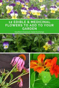 12 flores comestibles y medicinales para agregar a su jardín