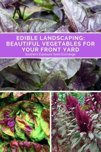 Paisajismo comestible: hermosas verduras para su patio trasero