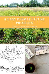9 proyectos fáciles de permacultura   Intercambio de semillas de exposición al sur