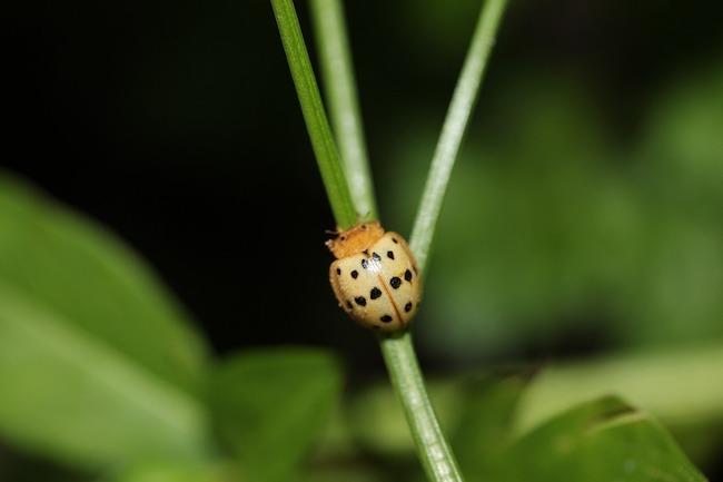 Lucha contra los escarabajos mexicanos | Intercambio de semillas de exposición al sur