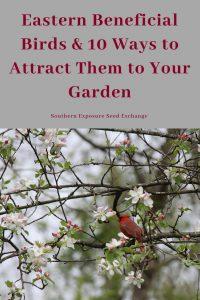 Aves benéficas del este y 10 formas de atraerlas a tu jardín