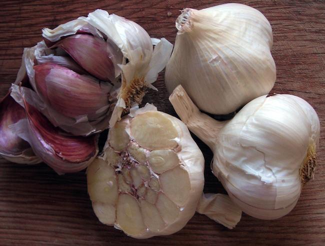 Alimentos frescos en invierno | Intercambio de semillas de exposición al sur