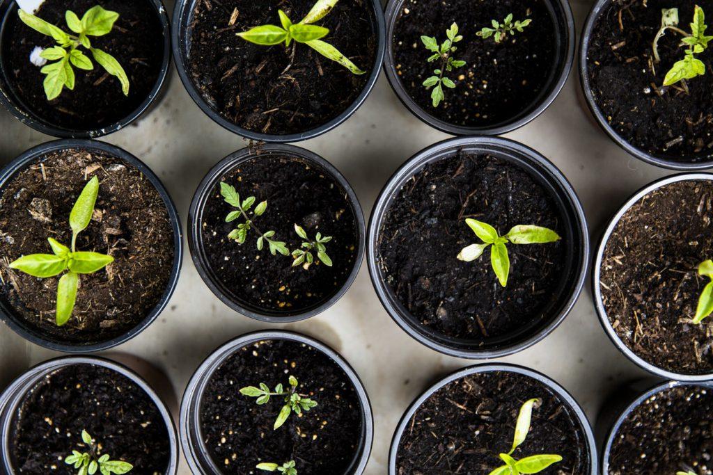 Té de abono casero | Intercambio de semillas de exposición al sur