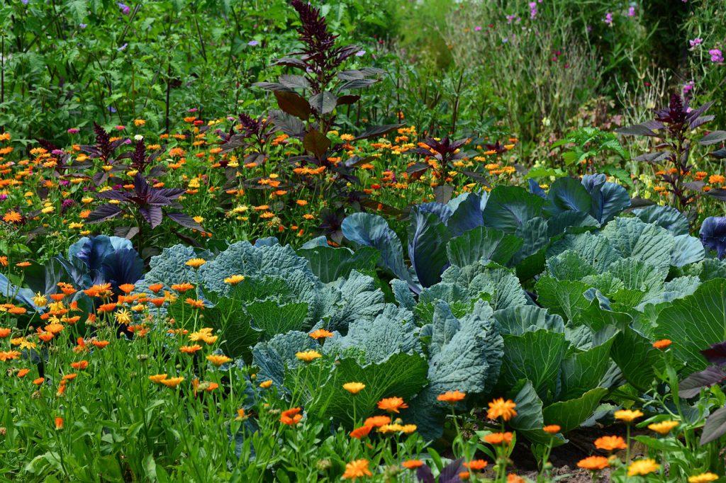 El jardín de Potager | Intercambio de semillas de exposición al sur