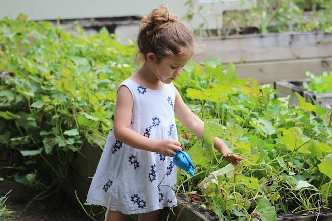 14 variedades para ayudar a los niños a enamorarse del cultivo de alimentos