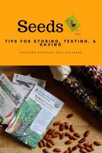 Semillas: consejos para almacenar, probar y guardar