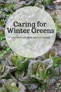 Cuidando los verdes de invierno   Intercambio de semillas de exposición al sur
