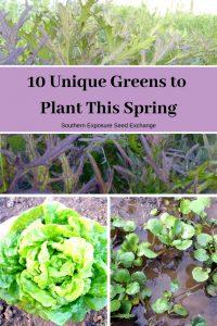 10 verduras únicas para plantar esta primavera