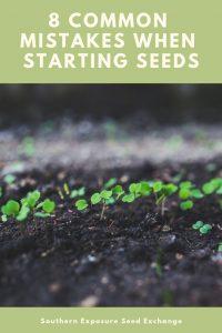 8 errores comunes al comenzar con semillas
