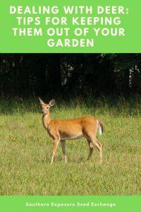Lidiar con los ciervos: consejos para mantenerlos fuera del jardín
