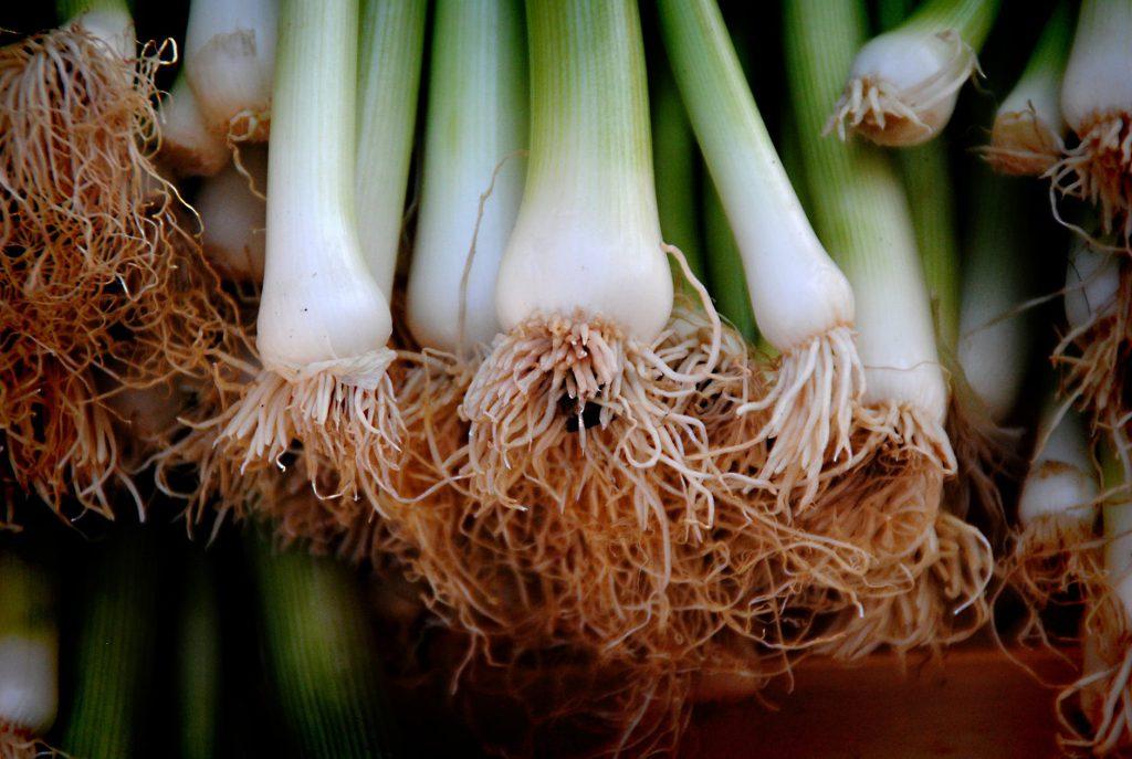 5 programas gratuitos sobre jardinería, alimentación y agricultura