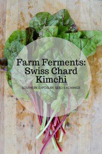 Levaduras agrícolas: kimchi de acelgas