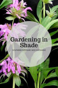 Jardinería sombreada | Intercambio de semillas de exposición al sur