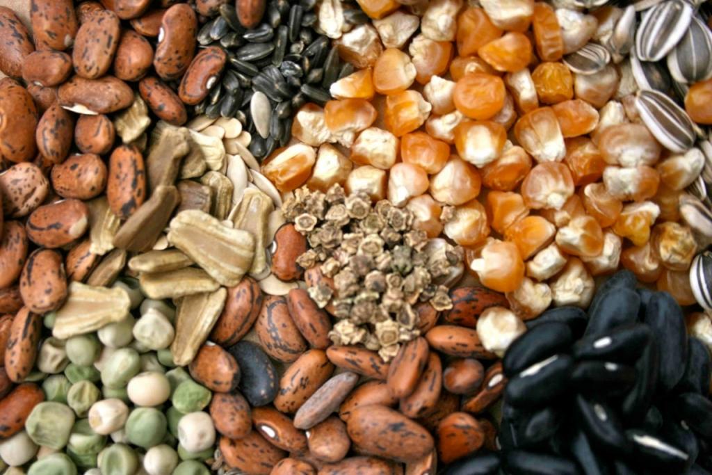 Obtenga más información sobre el almacenamiento de semillas y las pruebas de diversidad de cultivos