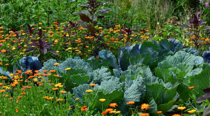 Intro to Companion Planting & 10 Pairs to Try