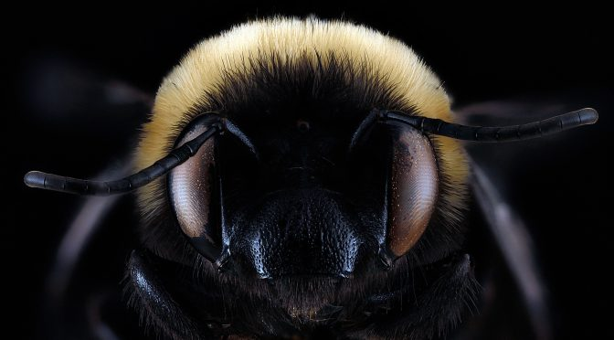 5 Bees Native to the Southeastern U.S. and Tips for Supporting Them