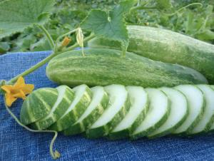 Herencias para plantar en julio