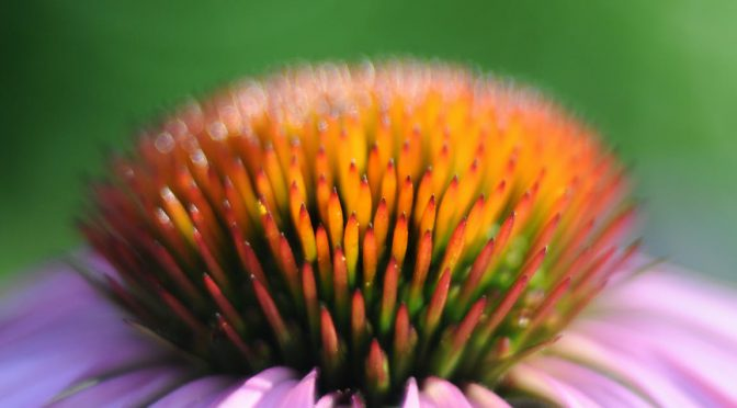 Beginners Medicine Garden: 10 Healing Plants