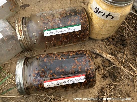 Siembra de última oportunidad   Intercambio de semillas de exposición al sur