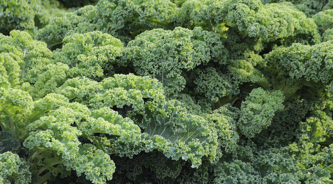 Preserving Leafy Greens