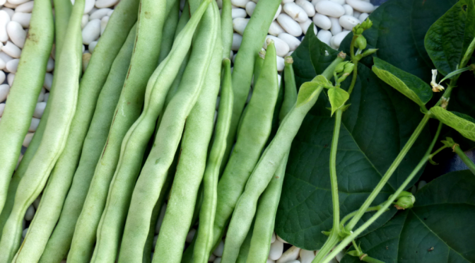 Drying Beans: Seed to Storage