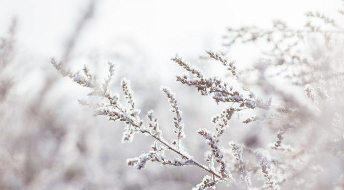 The Winter Solstice: Preparing for Spring