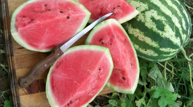 Tips for Growing Great Watermelons
