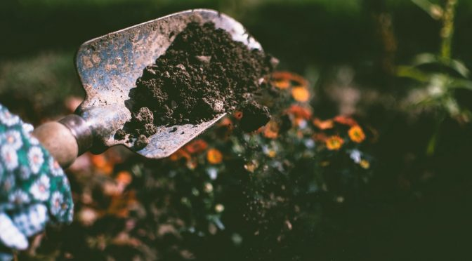 10 Easy Ways to Improve Your Soil